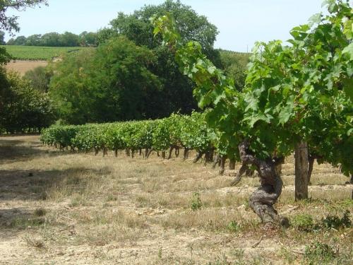 Coteaux de vigne